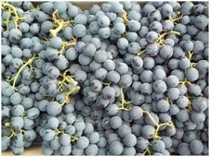 seme_grozdja
